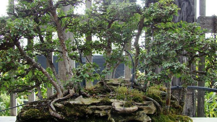 Парк Диких Животных (Wild Animal Park), San Diego 20818