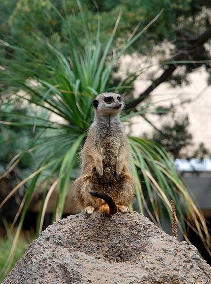Парк Диких Животных (Wild Animal Park), San Diego 74572