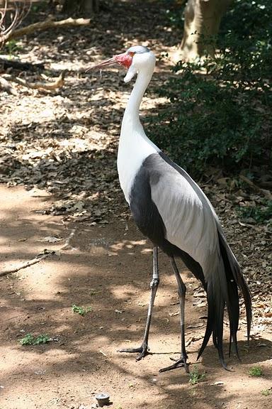 Парк Диких Животных (Wild Animal Park), San Diego 82182