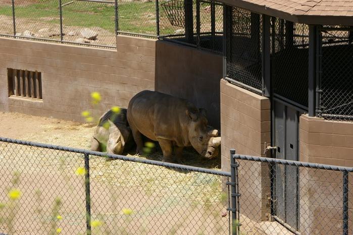 Парк Диких Животных (Wild Animal Park), San Diego 96647
