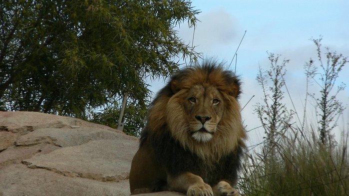 Парк Диких Животных (Wild Animal Park), San Diego 87446