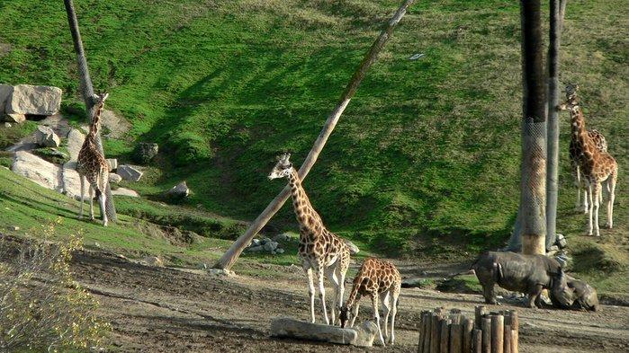 Парк Диких Животных (Wild Animal Park), San Diego 36576