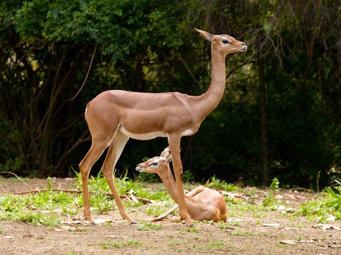 Парк Диких Животных (Wild Animal Park), San Diego 88597