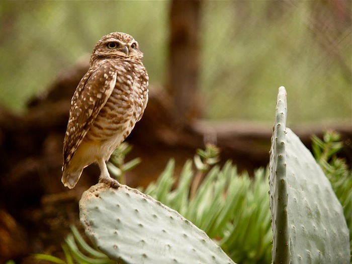 Парк Диких Животных (Wild Animal Park), San Diego 17640