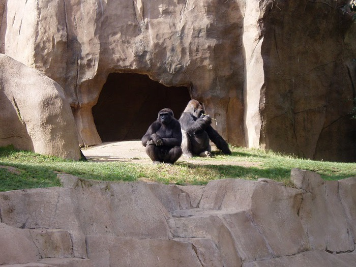 Парк Диких Животных (Wild Animal Park), San Diego 65617