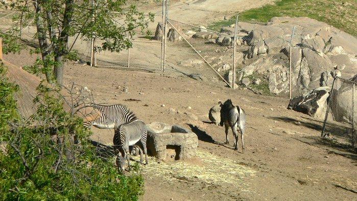 Парк Диких Животных (Wild Animal Park), San Diego 64034