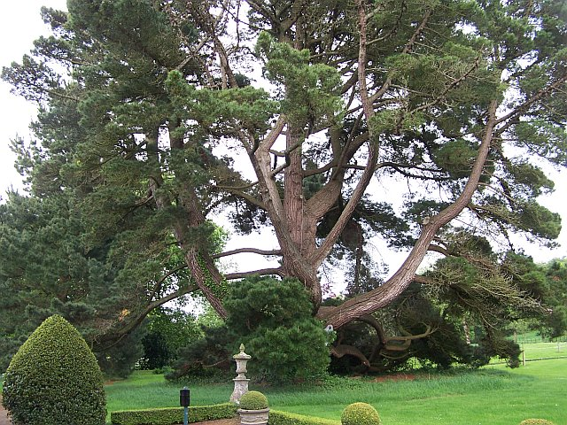 Замок Глайн (Glin Castle) графство Лимерик 58990