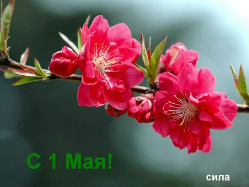 http://img0.liveinternet.ru/images/attach/c/1//58/456/58456789_1_maya.jpg