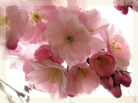 http://img0.liveinternet.ru/images/attach/c/1//58/512/58512436_18336773_1203427207_00.jpg