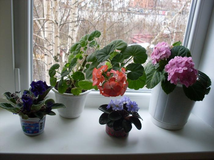 Цветы на подоконник