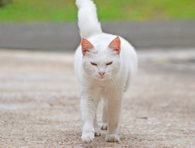 Кошка 27027