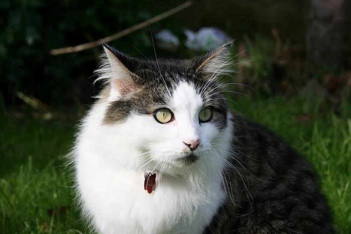Кошка 85672