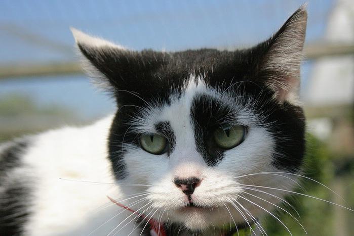 Кошка 27466