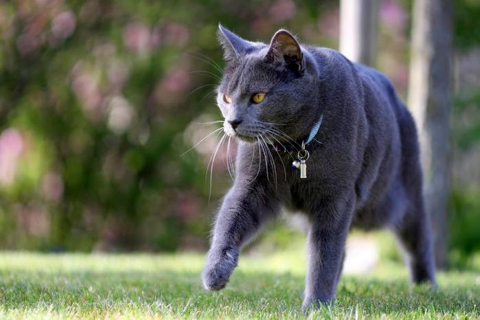 Кошка 67994