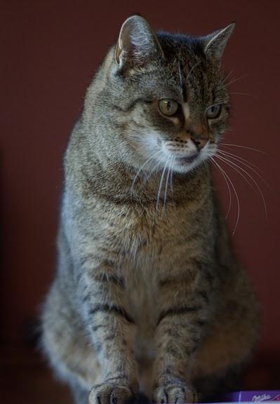 Кошка-2 81823