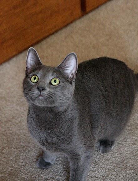 Кошка-2 83613