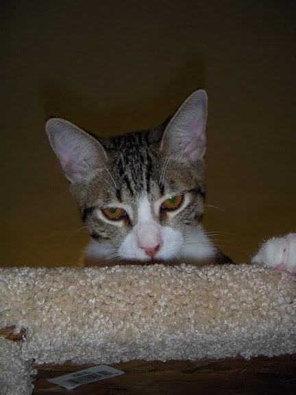 Кошка-2 85070