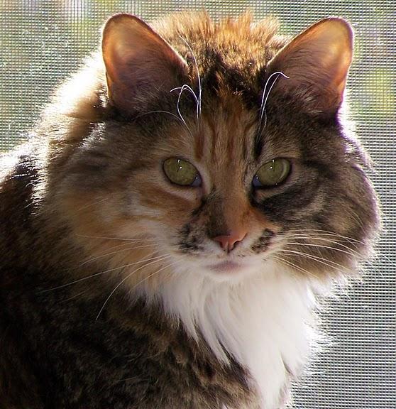 Кошка-2 27610