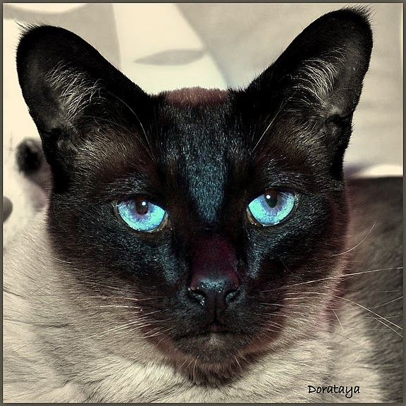 Кошка-2 30946