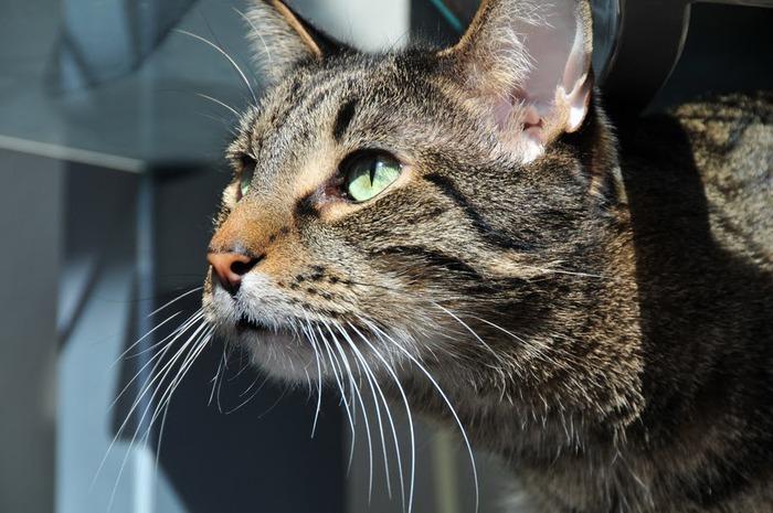 Кошка-2 68805