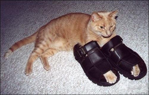 Кошка-2 40368
