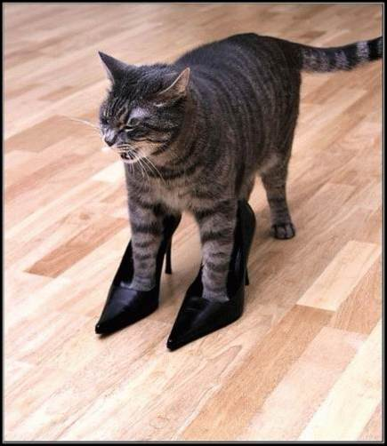 Кошка-2 35264