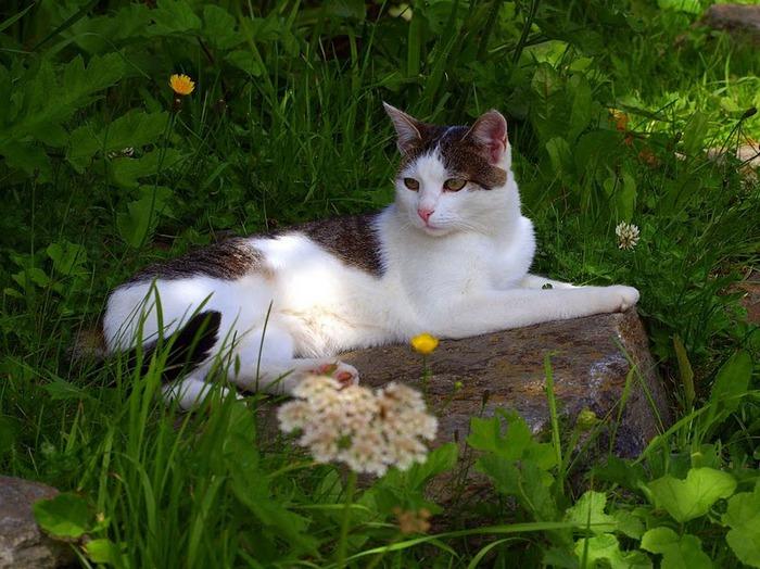 Кошка-2 23655