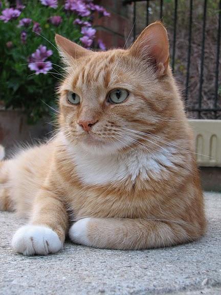 Кошка-2 17771