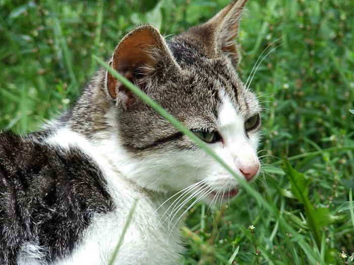 Кошка-2 97875