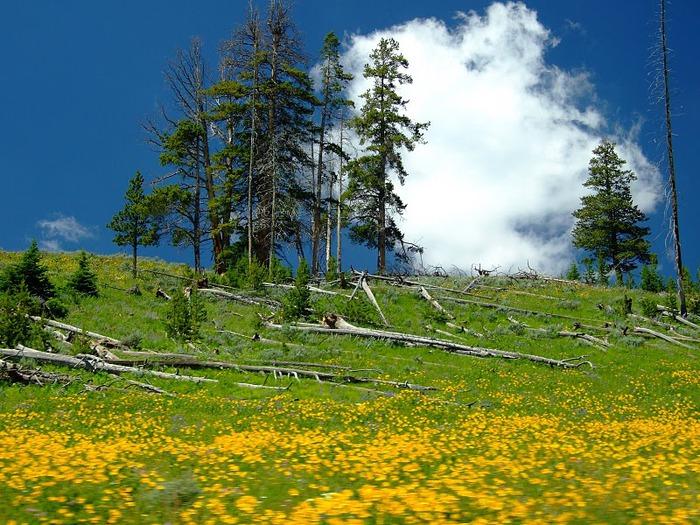 Национальный Парк Йеллоустоуна (Yellowstone National Park) 96131