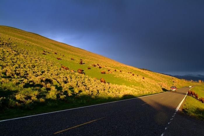 Национальный Парк Йеллоустоуна (Yellowstone National Park) 41905