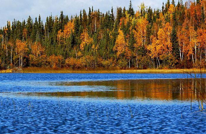 Национальный Парк Йеллоустоуна (Yellowstone National Park) 59064