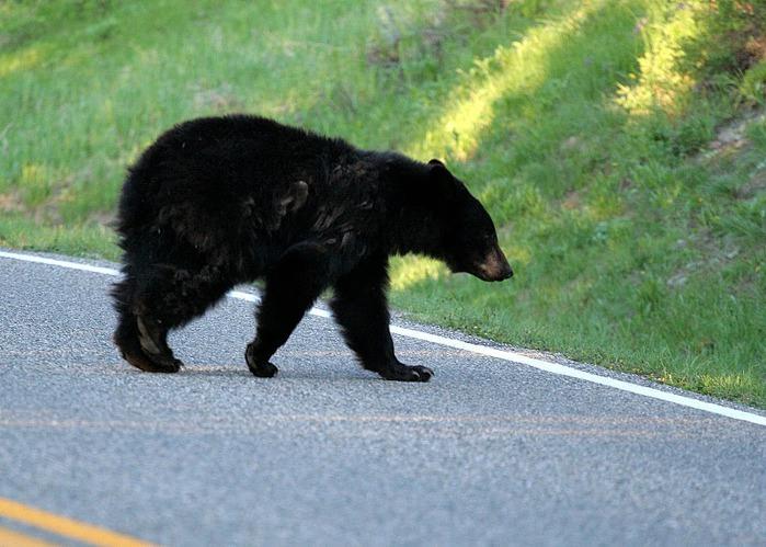 Национальный Парк Йеллоустоуна (Yellowstone National Park) 89816