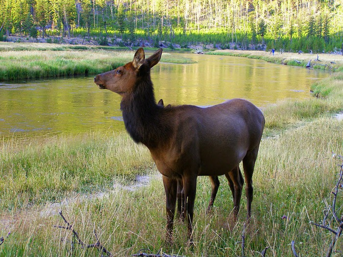 Национальный Парк Йеллоустоуна (Yellowstone National Park) 18780