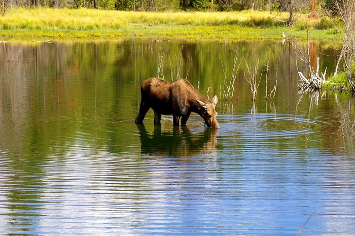 Национальный Парк Йеллоустоуна (Yellowstone National Park) 76947