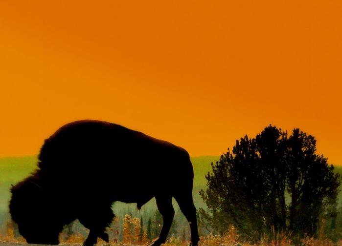 Национальный Парк Йеллоустоуна (Yellowstone National Park) 56337
