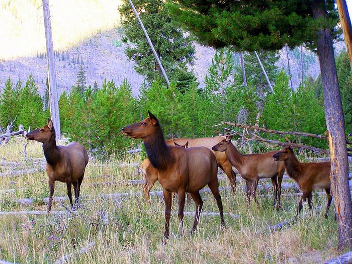 Национальный Парк Йеллоустоуна (Yellowstone National Park) 26632