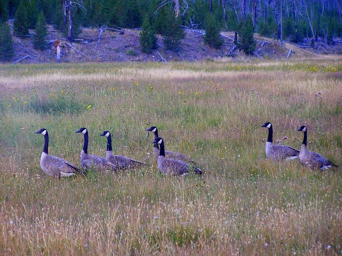 Национальный Парк Йеллоустоуна (Yellowstone National Park) 73086