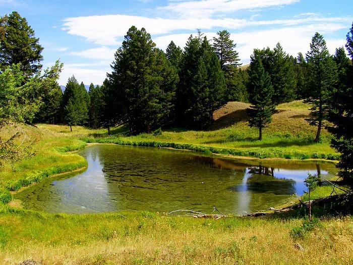 Национальный Парк Йеллоустоуна (Yellowstone National Park) 98867
