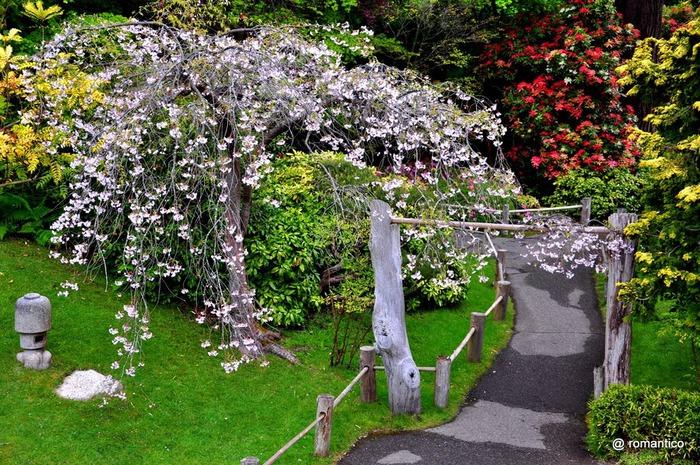 Японский чайный сад -(Hakone Japanese Tea Garden) 10335