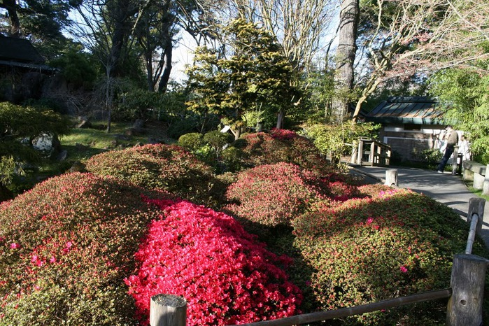 Японский чайный сад -(Hakone Japanese Tea Garden) 25721