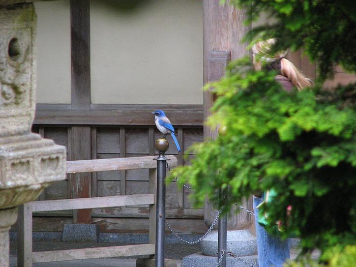 Японский чайный сад -(Hakone Japanese Tea Garden) 25657