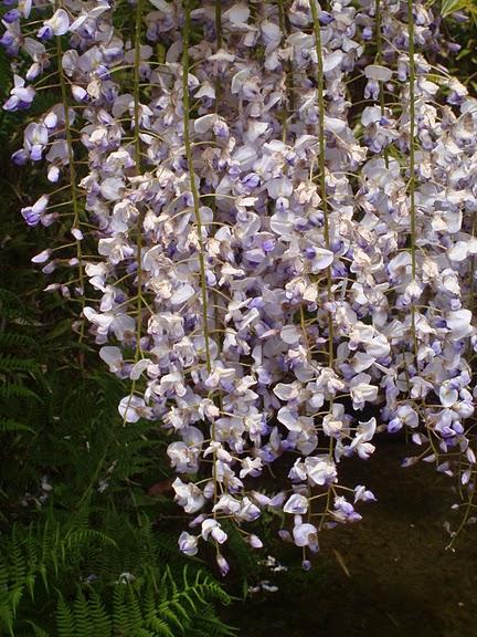 Японский чайный сад -(Hakone Japanese Tea Garden) 68747
