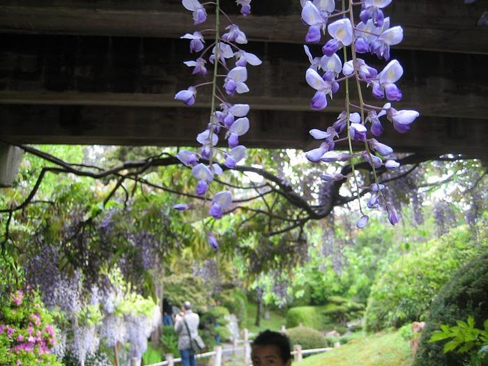 Японский чайный сад -(Hakone Japanese Tea Garden) 39541