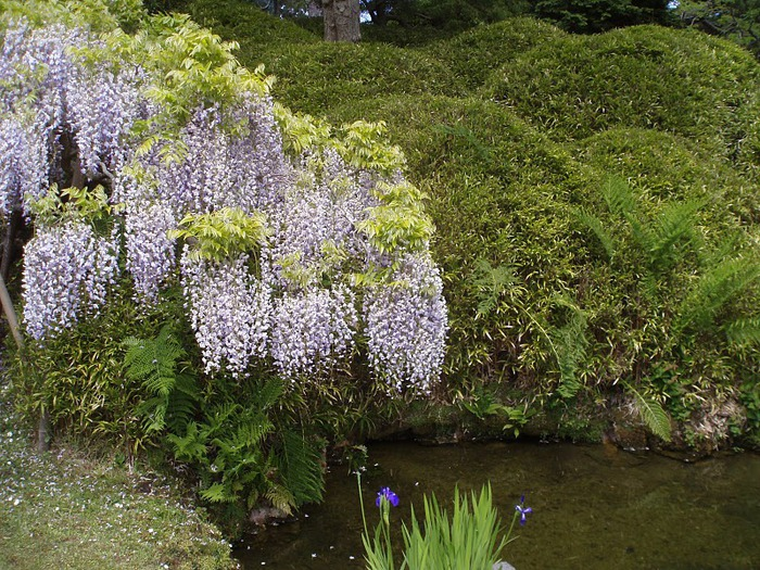Японский чайный сад -(Hakone Japanese Tea Garden) 11950