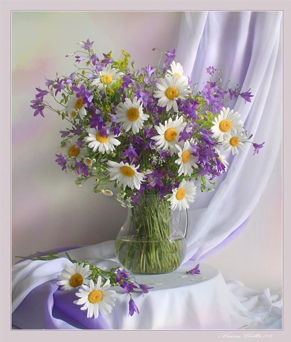 Картинки цветы полевые красивые букеты