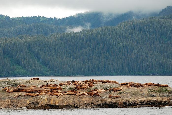 Аляска 58506
