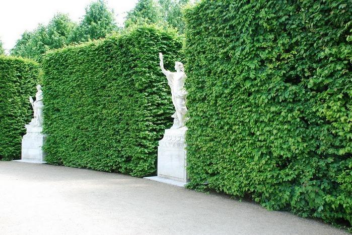 Поедем в царственный Версаль-2 16825