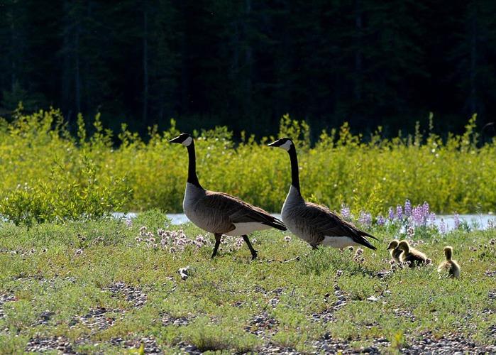 Национальный парк - Гранд Тетон 49464