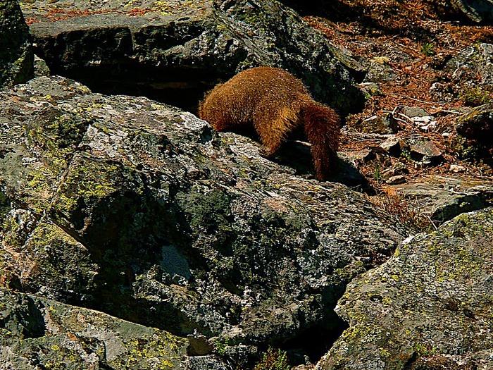 Национальный парк - Гранд Тетон 44532